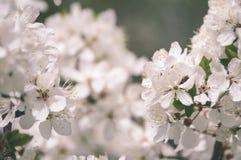el blanco de la primavera coloreó las hojas en luz del sol brillante - retrete viejo del vintage Imagenes de archivo