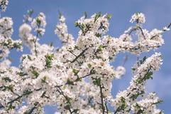 el blanco de la primavera coloreó las hojas en luz del sol brillante - retrete viejo del vintage Imagen de archivo