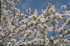 el blanco de la primavera coloreó las hojas en luz del sol brillante - retrete viejo del vintage Fotografía de archivo