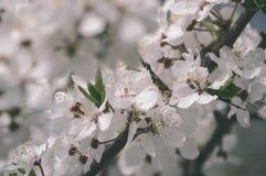 el blanco de la primavera coloreó las hojas en luz del sol brillante - retrete viejo del vintage Fotos de archivo