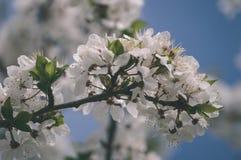 el blanco de la primavera coloreó las hojas en luz del sol brillante - retrete viejo del vintage Fotografía de archivo libre de regalías