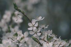el blanco de la primavera coloreó las hojas en luz del sol brillante - retrete viejo del vintage Foto de archivo
