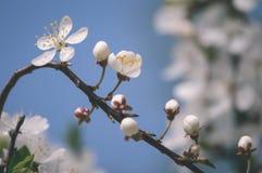 el blanco de la primavera coloreó las hojas en luz del sol brillante - retrete viejo del vintage Fotos de archivo libres de regalías