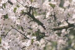el blanco de la primavera coloreó las hojas en luz del sol brillante - retrete viejo del vintage Foto de archivo libre de regalías