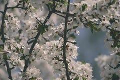 el blanco de la primavera coloreó las hojas en luz del sol brillante - retrete viejo del vintage Imagen de archivo libre de regalías