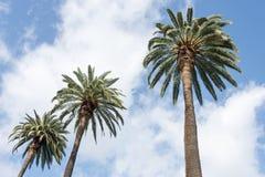 El blanco de las palmeras se nubla el cielo azul Imágenes de archivo libres de regalías