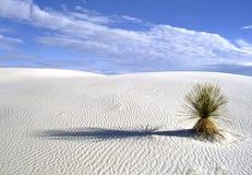 El blanco enarena el parque nacional en New México foto de archivo