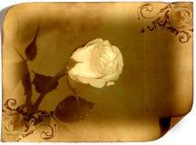 El blanco se levantó Fotografía de archivo libre de regalías
