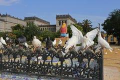 El blanco se zambulló con las alas abiertas en el parque de MarÃa Luisa en Sevilla fotos de archivo libres de regalías