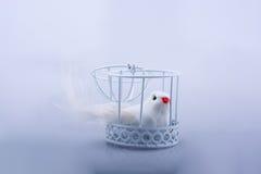 El blanco se zambulló en la jaula, paloma cerrada en una jaula Imagen de archivo