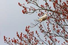 El blanco se zambulló en rama de florecimiento imagen de archivo