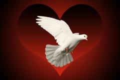 El blanco se zambulló símbolo del vuelo del amor en fondo rojo y negro del corazón Fotografía de archivo libre de regalías