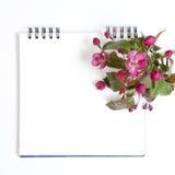 El bloc de bocetos con las flores de un Apple-árbol del niedzwetzkyana Dieck del Malus de Nedzvetsky aislado en el fondo blanco Fotos de archivo libres de regalías