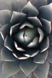 El Bloomer foto de archivo libre de regalías