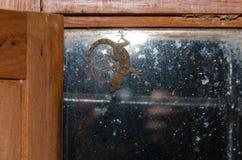 El boettgeri y el fotógrafo de Tarentola de la salamandra de la pared del ` s de Boettger reflejaron en la ventana imágenes de archivo libres de regalías