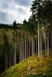 El borde de un alto bosque en una cuesta fotografía de archivo libre de regalías