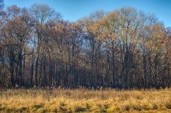 El borde de un bosque durante caída Fotos de archivo libres de regalías