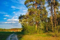 El borde del bosque de la primavera en el sol de la tarde Fotografía de archivo libre de regalías