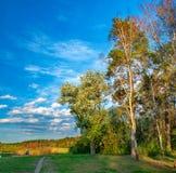 El borde del bosque de la primavera en el sol de la tarde Imagen de archivo libre de regalías