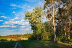 El borde del bosque de la primavera en el sol de la tarde Imágenes de archivo libres de regalías