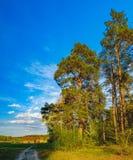 El borde del bosque de la primavera en el sol de la tarde Imagenes de archivo