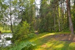 El borde del bosque en los bancos del río en el verano Fotografía de archivo