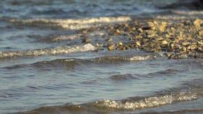 El borde del mar, Pebble Beach, guijarros abstraiga el fondo Pebble Beach con los pequeños guijarros y resaca del mar E metrajes
