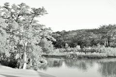 El borde del río de Staley Cypress AR Foto de archivo libre de regalías