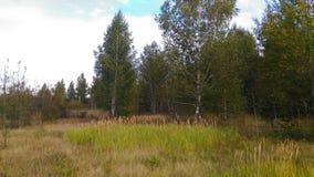 El borde reservado del bosque da vuelta gradualmente en un prado foto de archivo