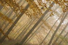 El bosque Imagenes de archivo