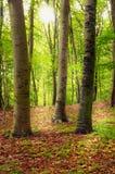 El bosque Fotografía de archivo libre de regalías