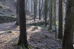 El bosque fotografía de archivo