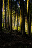 El bosque Imágenes de archivo libres de regalías