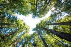 El bosque arriba imagen de archivo
