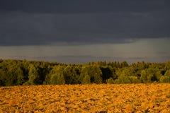 El bosque, campo y cielo cubierto, se encendió por el ajuste Imagen de archivo