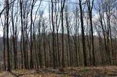 El bosque cerca de la ciudad Lukavac fotos de archivo