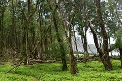 El bosque cerca de Polulu ennegrece la playa de la arena, costa de Kohala, isla grande, Hawaii Imagen de archivo libre de regalías