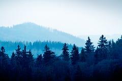 El bosque checo por una tarde fría en Karlovy varía fotografía de archivo libre de regalías