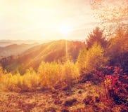 El bosque colorido Foto de archivo