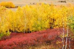 El bosque colorido del otoño en el hillsdie Fotografía de archivo
