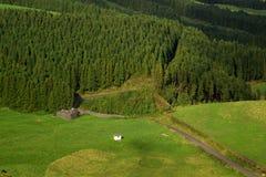 El bosque comienza, San Miguel, Azores Imágenes de archivo libres de regalías