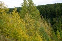 El bosque conífero en montañas cárpatas pasta la trayectoria imagenes de archivo