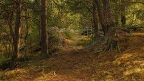 El bosque con la cerca Imagenes de archivo