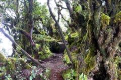 El bosque cubierto de musgo más viejo del mundo Imágenes de archivo libres de regalías