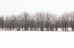 El bosque cubrió por la nieve fresca durante invierno La escena del invierno es el contraste entre los árboles escarchados, prime fotos de archivo