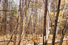 El bosque de árboles vacia de hojas Imagen de archivo