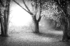 El bosque de hadas Fotos de archivo libres de regalías