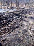 El bosque de Kabacki imagen de archivo