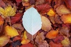 El bosque de la haya del otoño sale del suelo de oro rojo amarillo Fotografía de archivo libre de regalías