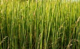 El bosque de la hierba del campo Imágenes de archivo libres de regalías